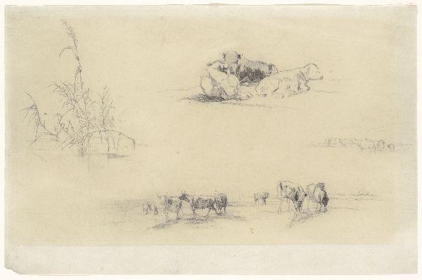 Studies van riet en groepen vee